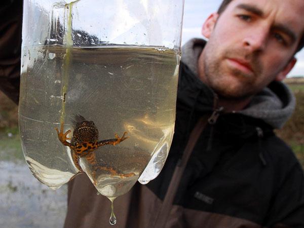 newt survey bottle traps