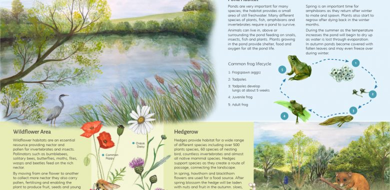 Kent Wildlife Interpretation Board